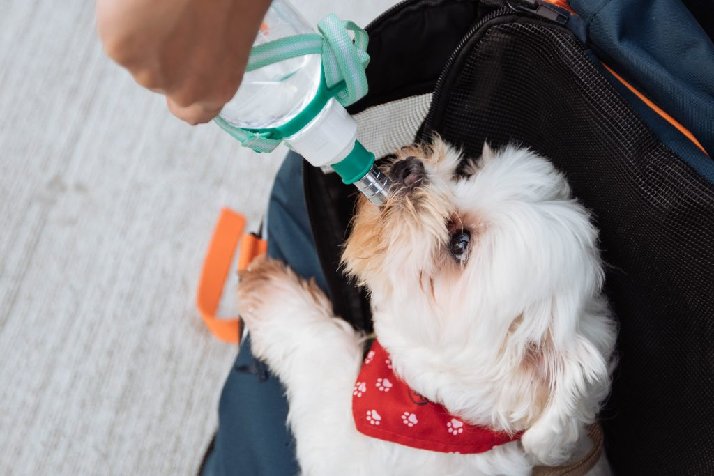 Travel accessories for dogs coming in handy.